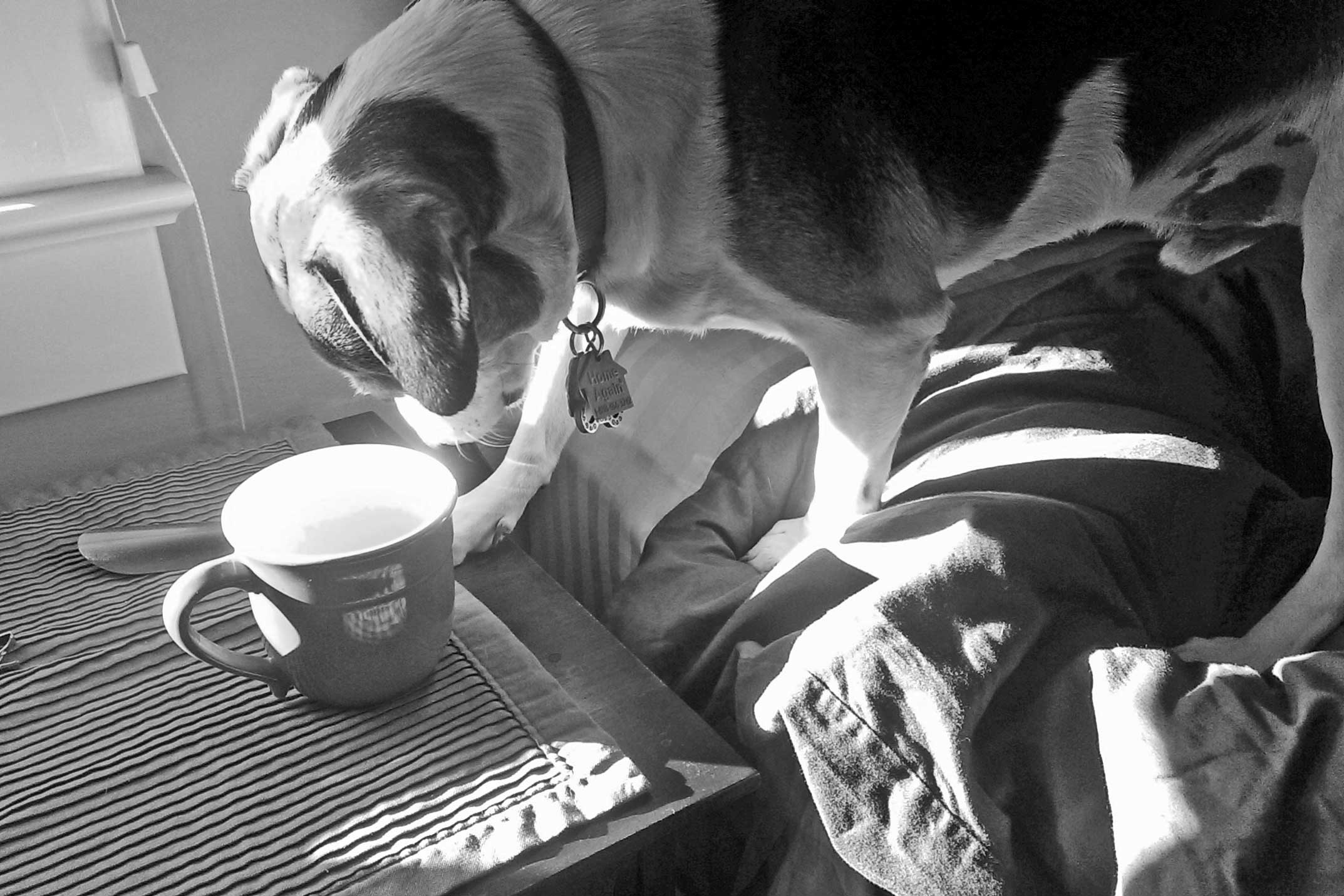Chambre En Bordel : Rover s morning coffee being ernest